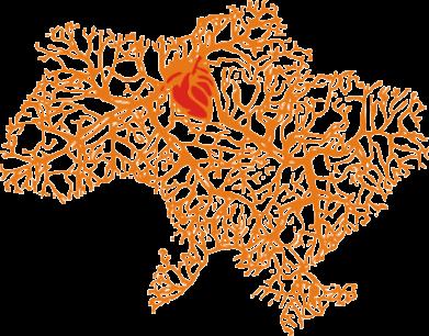 Принт Мужская майка Карта України з серцем - FatLine