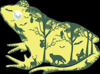 Принт Жіноча футболка Froggy Night, Фото № 1 - FatLine