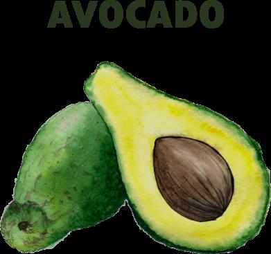 Принт Женская футболка Avocado watercolor, Фото № 1 - FatLine