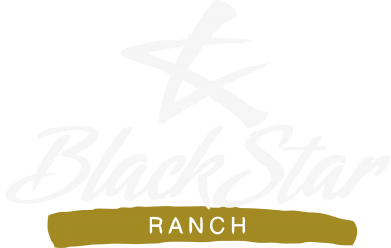 Принт Реглан Black Star Ranch - FatLine