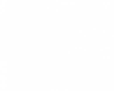Принт Женская футболка Soft butterfly, Фото № 1 - FatLine