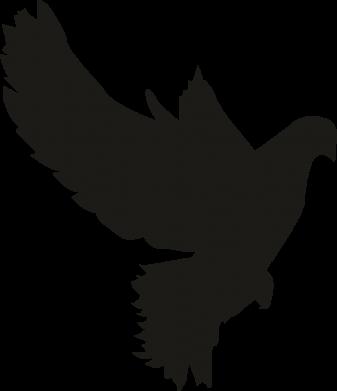 Принт Женская футболка Pigeon silhouette, Фото № 1 - FatLine