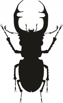 Принт Женская футболка Bugs silhouette, Фото № 1 - FatLine