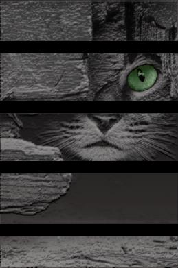 Принт Женская футболка All seeing cat, Фото № 1 - FatLine