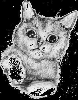 Принт Женская футболка Pencil drawing of a kitten, Фото № 1 - FatLine