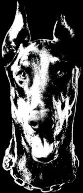 Принт Кружка 320ml Доберман чорний, Фото № 1 - FatLine
