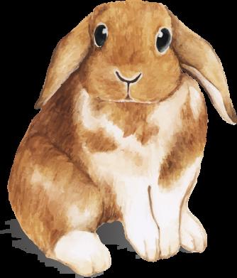 Принт Жіноча футболка Маленький кролик, Фото № 1 - FatLine