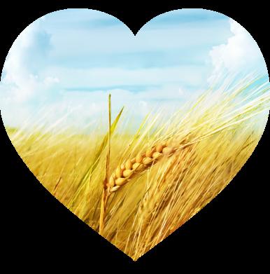 Принт Жіноча футболка Пейзаж України в серце, Фото № 1 - FatLine