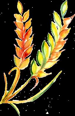Принт Жіноча футболка Watercolor spikelets, Фото № 1 - FatLine