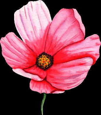 Принт Женская футболка Poppy flower, Фото № 1 - FatLine