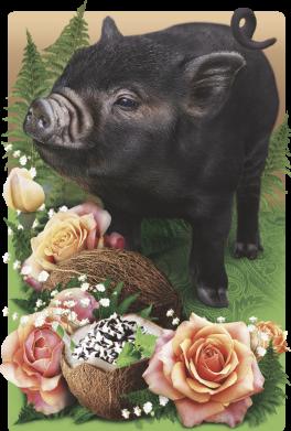 Принт Кепка Black pig and flowers, Фото № 1 - FatLine