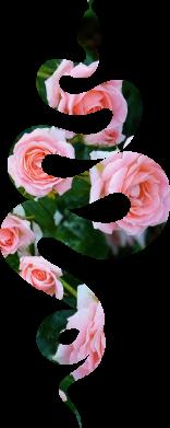 Принт Жіноча футболка Snake and roses, Фото № 1 - FatLine