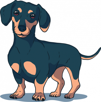 Принт Женская футболка Cute dachshund, Фото № 1 - FatLine