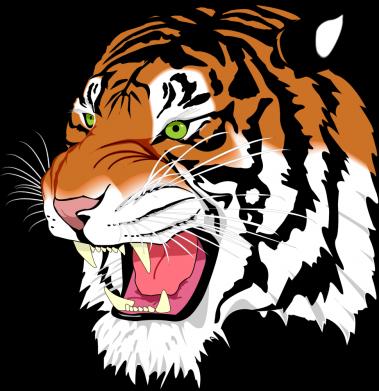 Принт Жіноча футболка Tiger roars, Фото № 1 - FatLine