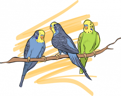 Принт Женская футболка Волнистые попугайчики, Фото № 1 - FatLine