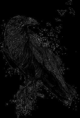 Принт Жіноча футболка A pack of ravens, Фото № 1 - FatLine