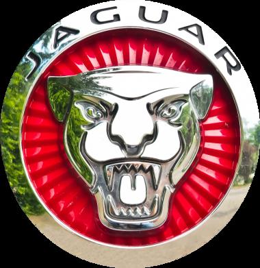 Принт Жіноча футболка Jaguar emblem, Фото № 1 - FatLine