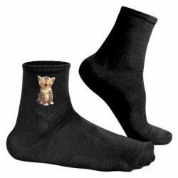 Чоловічі шкарпетки Cute kitten vector