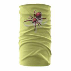 Бандана-труба Red spider